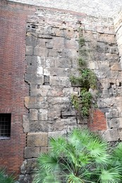 Plants Growing Out of Old City Walls of Barcelona.jpg